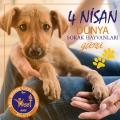 4 Nisan Dünya Sokak Hayvanları koruma günü